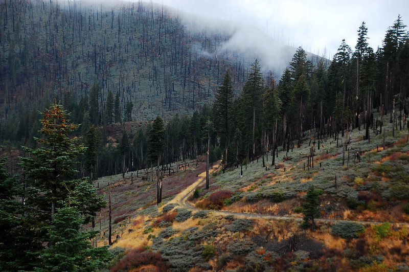 Skyline Mountainway degenerates into 'two track' and works its way along the edge of the valley.  Fall colors on the ground cover contrast nicely with the burned area and the cloak of fog.  The whole valley was moist and the fresh smell of wet juniper - which is maybe the best smell on earth - hung heavy in the air.