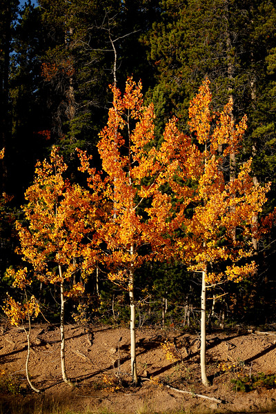 Fall Colors in Boulder County Peak to Peak Highway