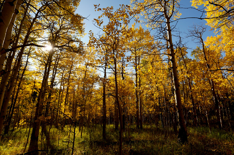 Fall Colors in Boulder County Peak to Peak Highway