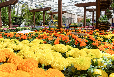 Colorful flowers line the garden area of the new Chico Ace Hardware location Tuesday in Chico. (Matt Bates -- Enterprise-Record)