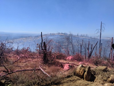 Pink retardant dropped from a Cal Fire firefighting plane coats the ground Friday around the Forbestown Fire east of Oroville. (Jake Hutchison -- Enterprise-Record)