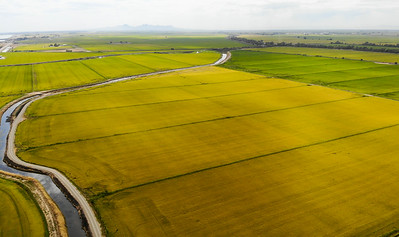 An aerial view of sprawling rice fields is seen from a drone on Wednesday in Richvale. (Matt Bates -- Enterprise-Record)