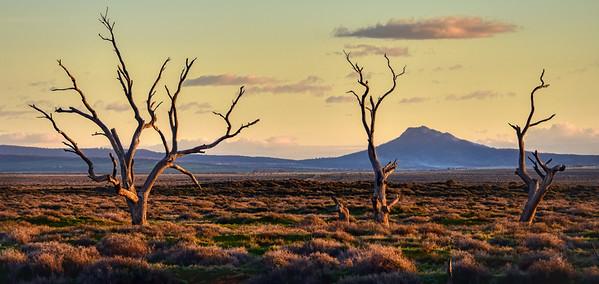 """""""Willochra Creek, Willochra, South Australia."""""""