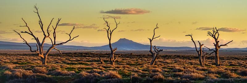 """""""Willochra Creek, Willochra, South Australia.""""  2."""