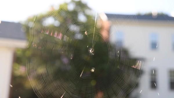Charlotte's Web in Davidson