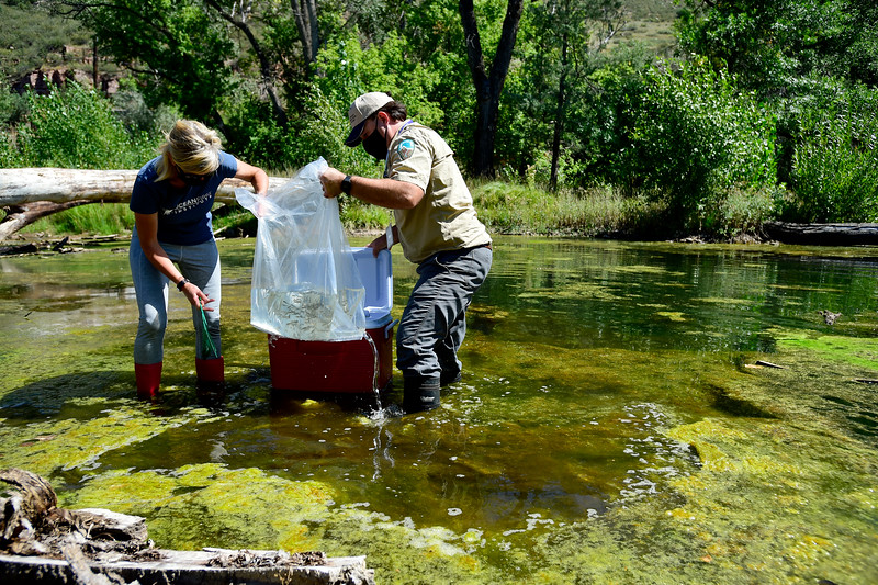 Northern Red Belly Dace Reintroduced with Help From St. Vrain Innovation Center