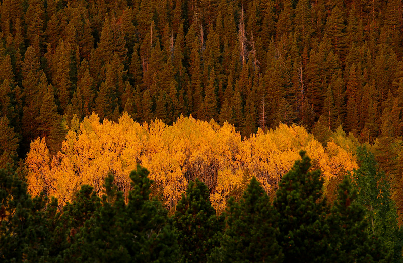 Fall Colors Starting to Appear in Boulder County