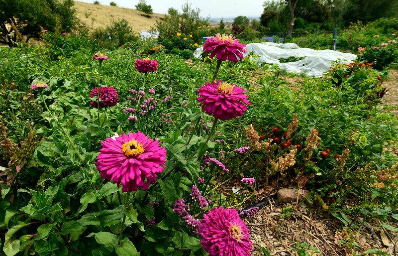 Foothills Farm Collective regenerative farming