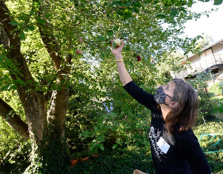 Boulder Apple Tree Project