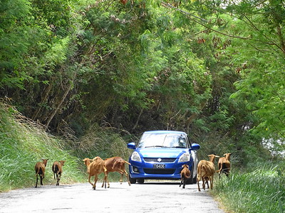 Traffic in Paradise