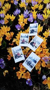 Pansies & Polaroids