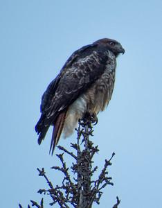 Hawk watch 2