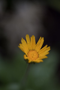 Yellow Flower 2