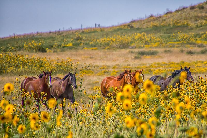 Horses Near Springer, New Mexico