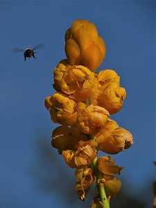 candle plant and bee