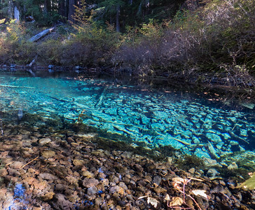 Another crystal clear pond near Mckenzie trail