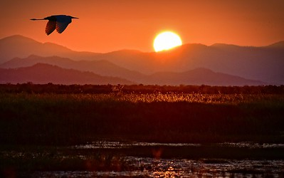 Sunset on Townsville Common and Egret.