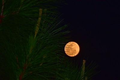 Bruce Highway south of Cardwell.  Pine tree and Moon. 1.
