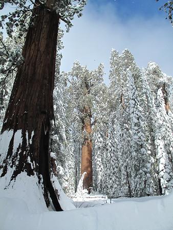 Sequoia Snowshoe 2014