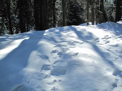 Sequoia Snowshoe 2016