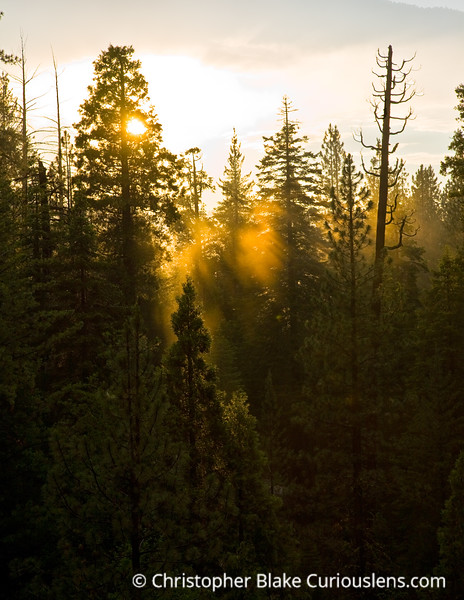 Sun Rays- Sequoia NP-1