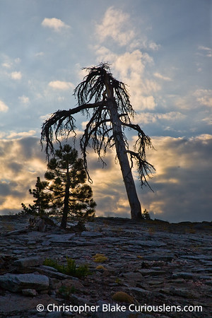 Sunrise and Tree - Sequoia NP-1