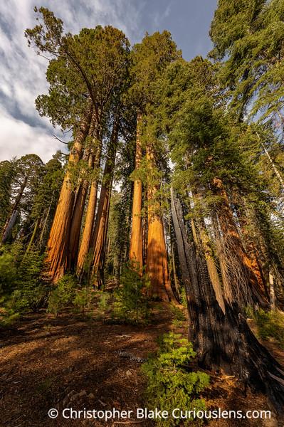 Past Present and Future - Sequoia