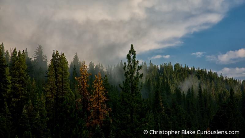 Fog- Sequoia NP-3
