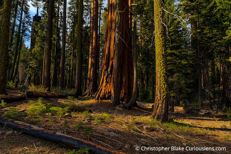 Late Afternoon in Sequoia NP