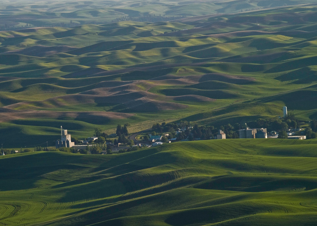 Hills of Palouse from Steptoe Butte
