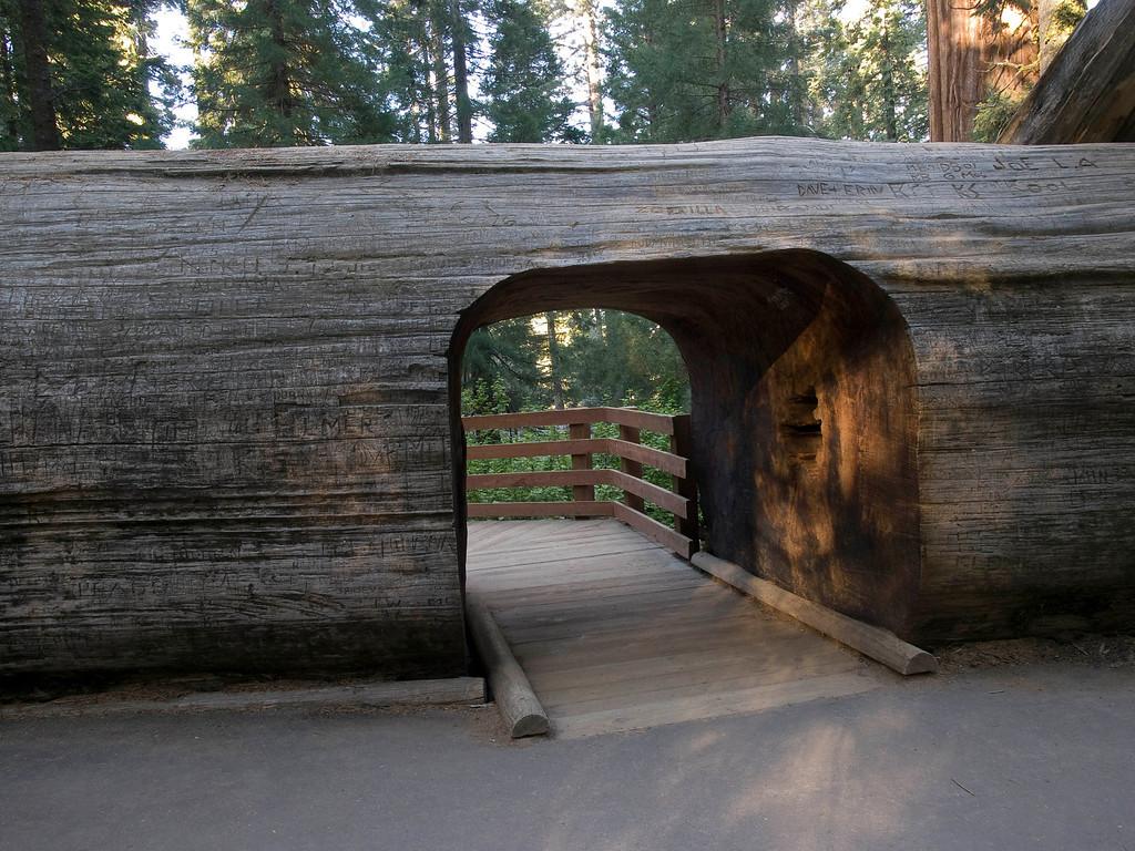 Pedestrian tunnel through sequoia