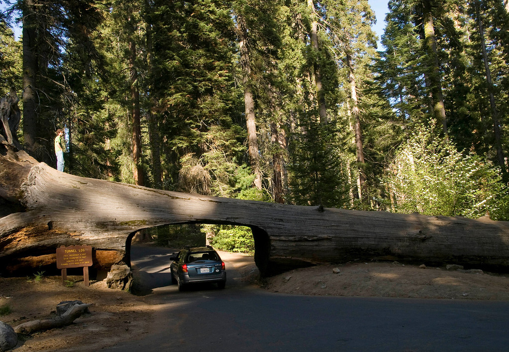 Drive through Tunnel Log