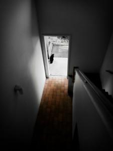 """"""" The Black Cat ... """""""