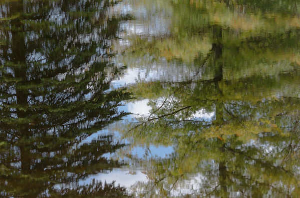 reflecting trees