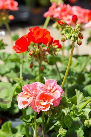 PLANT15-113