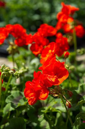 PLANT15-112