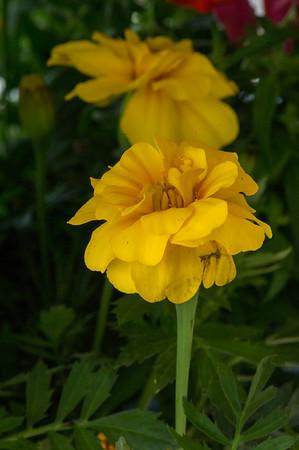 PLANT15-089