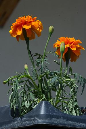PLANT15-076