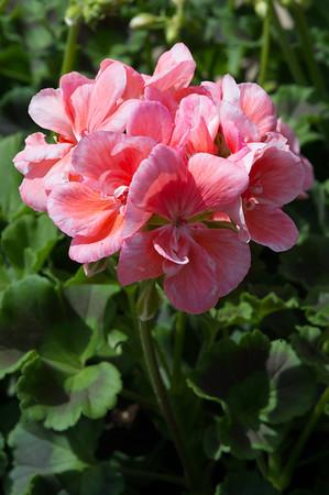 PLANT15-075