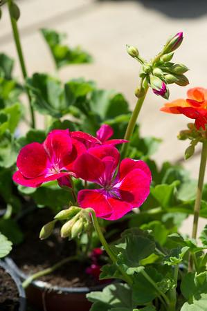 PLANT15-114
