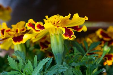 PLANT15-102