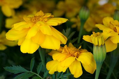 PLANT15-100