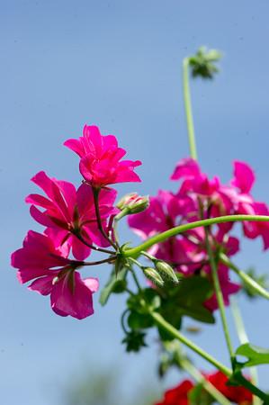 PLANT15-107