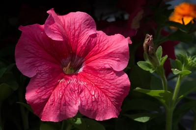 PLANT15-080