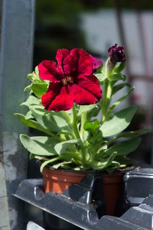 PLANT15-085