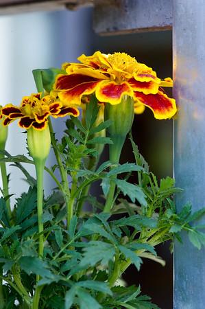PLANT15-103