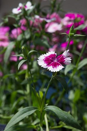 PLANT15-081