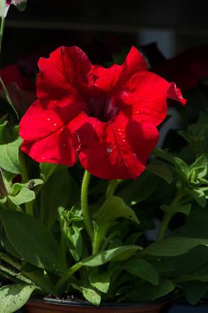 PLANT15-082