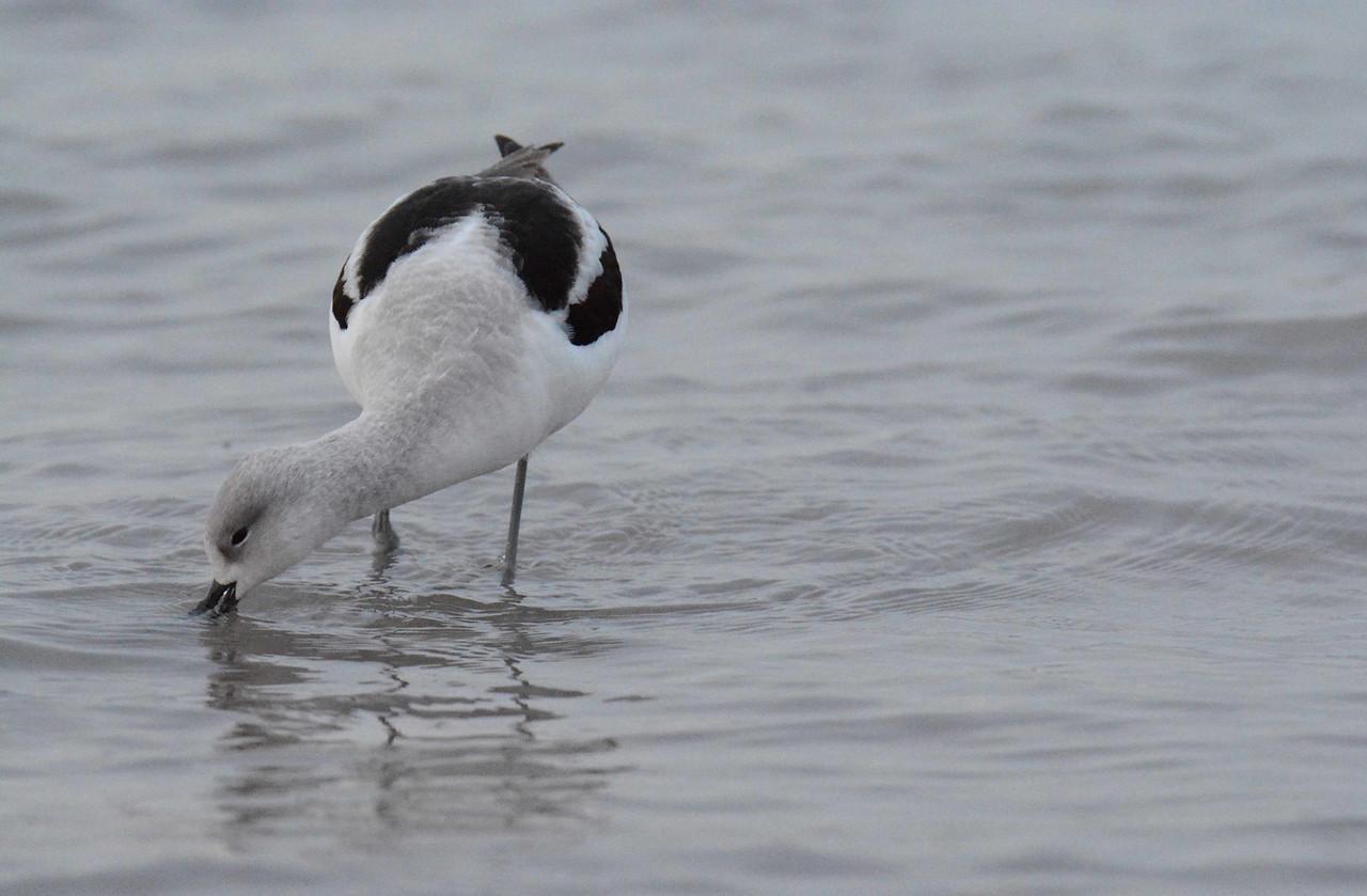 """Shore Birds"" by William Stanley Merwin:"