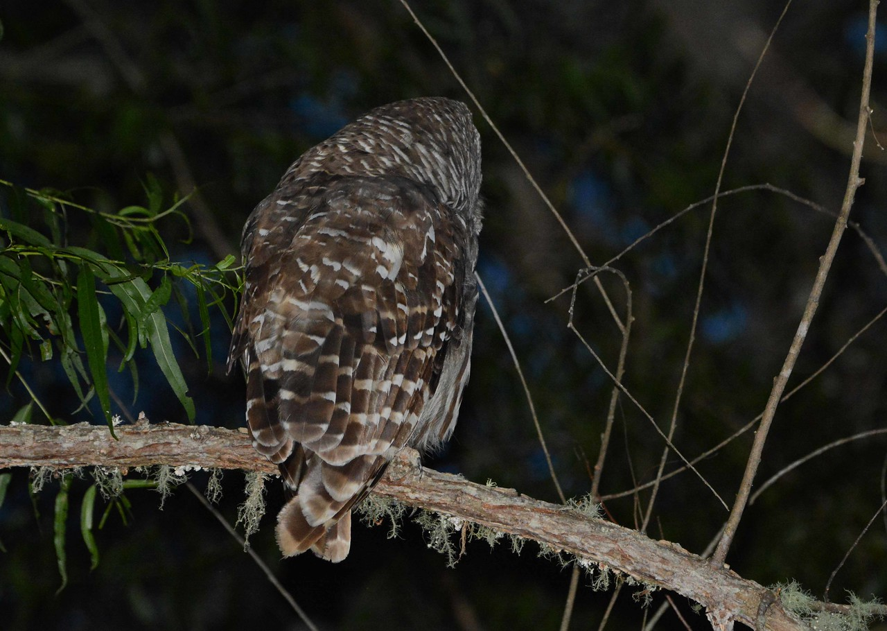 'The binocular owl,<br /> fastened to a limb<br /> like a lantern<br /> all night long,<br /> sees where all<br /> the other birds sleep: